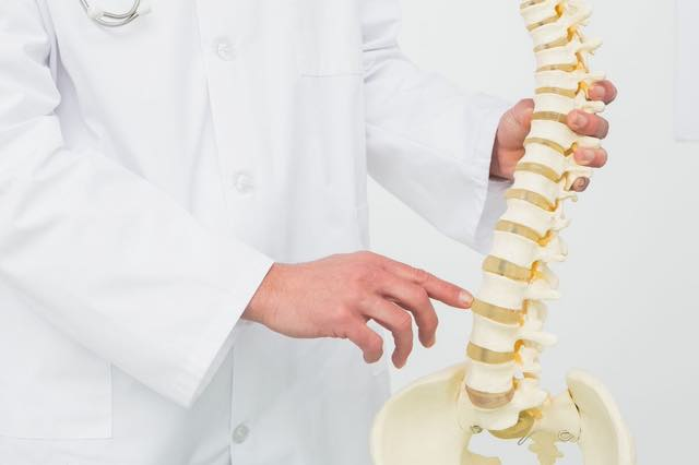 Physiotherapist showing Spinal Column